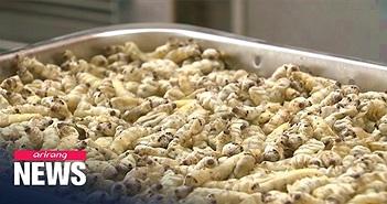 Phòng và trị bệnh Alzheimer nhờ bột tằm sấy khô?
