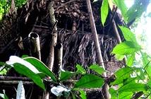 Tại sao cây chết ở vùng nhiệt đới?