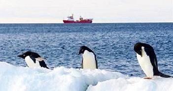 Hóa ra chim cánh cụt ở Nam Cực lâu hơn chúng ta tưởng