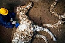 Phát hiện con vật đông cứng 2.000 năm sau thảm hoạ núi lửa