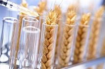 Đã tìm được cách khống chế sinh vật biến đổi gen