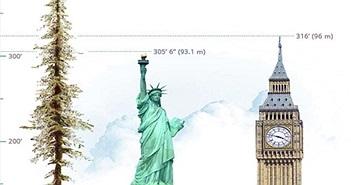 Điều kỳ thú về cây cao nhất thế giới, cao hơn 110m