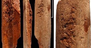 Dụng cụ bằng xương 115.000 năm tuổi khiến giới khoa học ngỡ ngàng