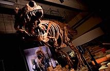 Đây là khủng long bạo chúa vĩ đại nhất thế giới