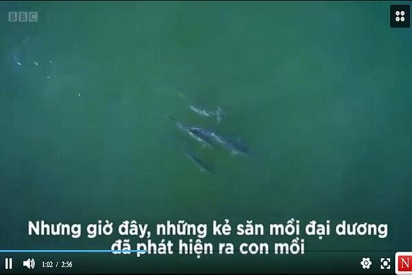 Video: Hàng triệu con cá phủ kín bãi tắm biển ở Mỹ