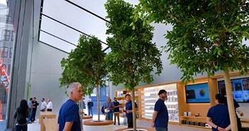 Apple Store được thiết kế lại sau 15 năm