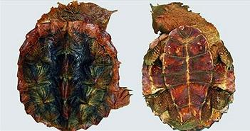 Các nhà khoa học bất ngờ phát hiện loài rùa cổ đại mới