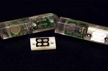 MIT phát triển vi khuẩn trên chip có khả năng phát hiện chảy máu dạ dày