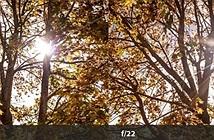10 mẹo giúp bạn lợi dụng flare để tạo nên những bức ảnh độc đáo