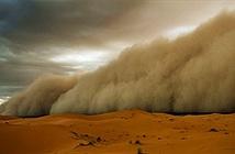 Bụi Sahara, kẻ phá hoạimùa hè Caribean