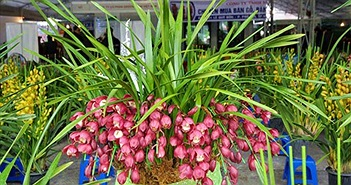 Tuyệt chiêu trồng và chăm bón hoa địa lan đẹp lung linh