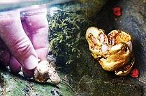 Tìm thấy cục vàng tự nhiên lớn nhất sau 500 năm, giá 1,5 tỷ đồng