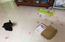 Chồng bị vợ phát hiện giấu quỹ đen vì ... mèo cưng