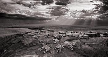 Ngắm ảnh động vật hoang dã đẹp nhất năm 2014