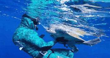 Thợ lặn cứu rùa biển và màn cảm ơn bất ngờ