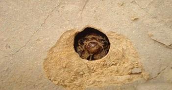 Loài vật ẩn náu 17 năm dưới lòng đất là đặc sản tại Việt Nam