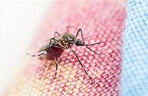 Drone và smartphone giúp chống bệnh sốt rét ở Tanzania