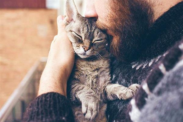 Cứu mèo bị thương, người phụ nữ được báo ân một cách kỳ diệu
