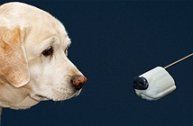 Thiệt hại hàng tỷ USD mà khoa học vẫn chưa tìm được công nghệ nào thính như mũi chó