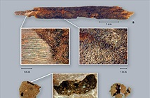 Kỹ thuật nấu ăn 10.000 năm làm thay đổi nền văn minh cổ đại