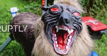 """Sự thật về """"sói khủng bố"""" vô cùng đáng sợ ở Nhật Bản"""