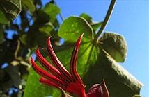Điểm danh 10 loài hoa quái dị nhất hành tinh