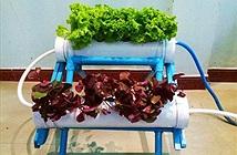 Sinh viên với dự án trồng rau không cần đất