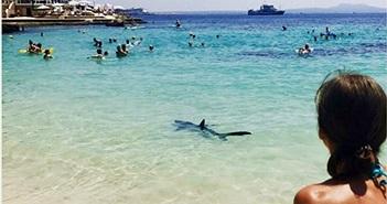 Cá mập xanh lộ diện chỗ tắm đông người ở Địa Trung Hải