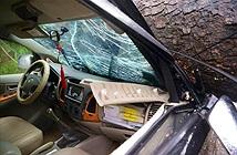 Đạp cửa, bố cứu con gái thoát khỏi xe bị cây cổ thụ đổ trúng