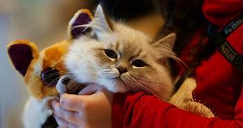 Lạ lùng giới trẻ TQ nuôi thú cưng như con vì điều khó tin