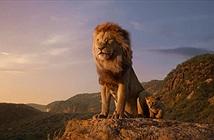 Sự thật sốc thế giới sư tử so với The Lion King