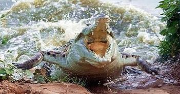 Kinh hoàng du khách bị cá sấu cắn thẳng vào đầu khi đang lặn