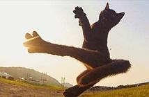 Ảnh ấn tượng: Khi loài mèo là những bậc thầy võ thuật (1)