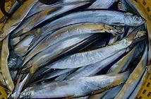 Sự thật thú vị về cá xương xanh đặc sản Kiên Giang