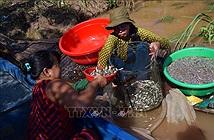Ngón nghề nuôi nhử cá đồng mùa nước nổi