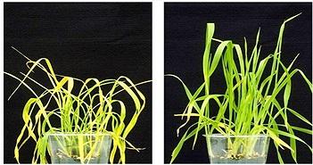 Hoạt chất mới bảo vệ cây trồng khỏi hạn hán, bất chấp biến đổi khí hậu