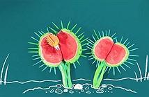 Những loài cây ăn thịt điển hình