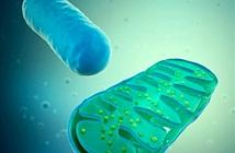 Tìm ra cách thay thế những tế bào già yếu trong cơ thể người