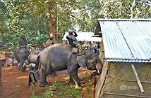 Thuê voi khổng lồ phá nhà để... cưỡng chế di dời