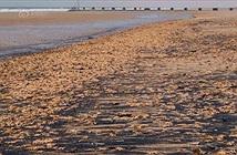 Ảnh sốc: Hàng ngàn sinh vật khó tin chiếm đóng bờ biển