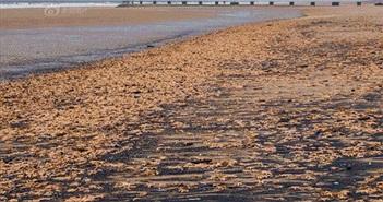 """Ảnh sốc: Hàng ngàn sinh vật khó tin """"chiếm đóng"""" bờ biển"""