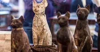Rùng mình khai quật hàng chục xác ướp sư tử, mèo, cá sấu