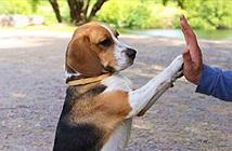 Trong suốt cuộc đời loài chó học được 165 từ