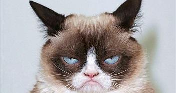 """Chú mèo mặt quạu """"gây sốt"""" vừa kiếm được 710 ngàn USD từ vụ kiện bản quyền"""