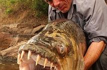 10 loài thủy quái nước ngọt nguy hiểm nhất trên thế giới