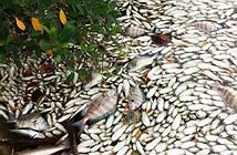 Thủ tướng yêu cầu tập trung thu thập tài liệu chứng cứ vụ cá chết