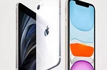 Camera iPhone SE 2020 liệu có ngon hơn iPhone 11?