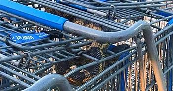 Chết khiếp nhìn rắn ngoe nguẩy trong xe đẩy hàng siêu thị