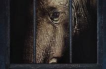 Video: Vụ án voi Tyke chết vì 86 viên đạn - vết đen của lịch sử xiếc thú
