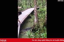 Clip hài: Đánh rơi điện thoại xuống đầm cá sấu và cái kết